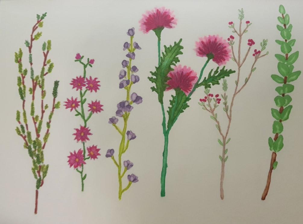 Wildflower study