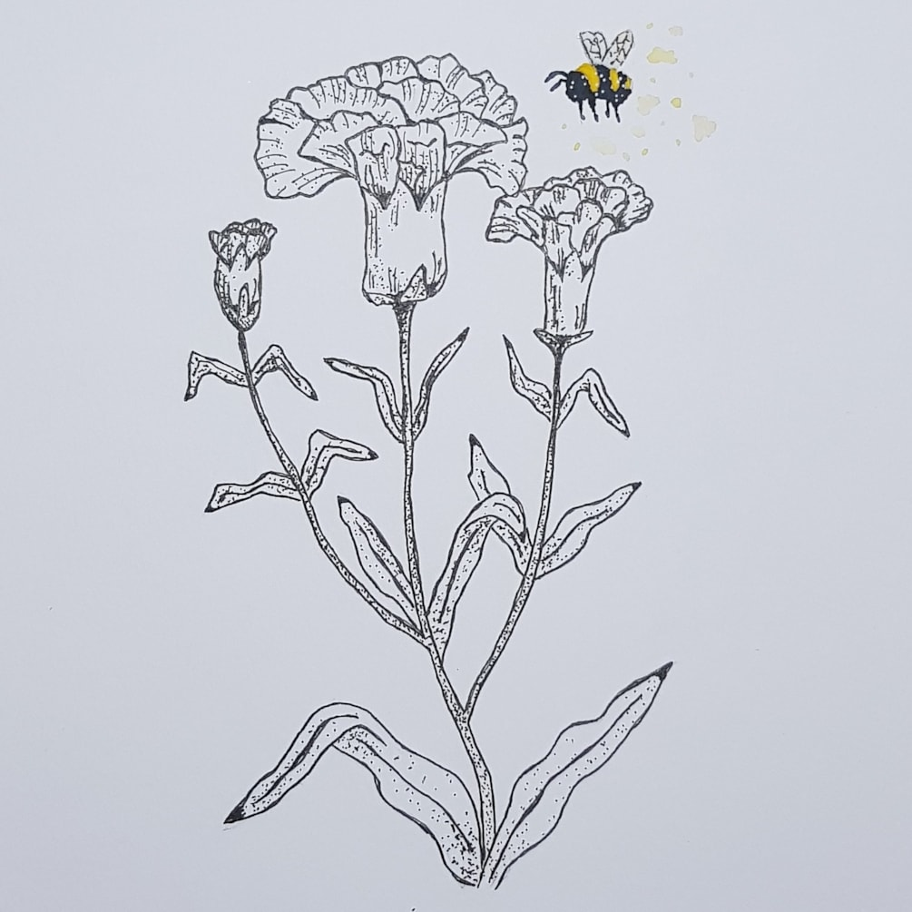 The carnation and the bee