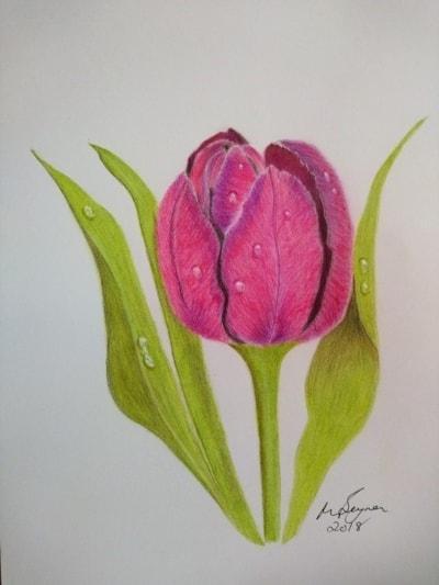 Tulip with Raindrops