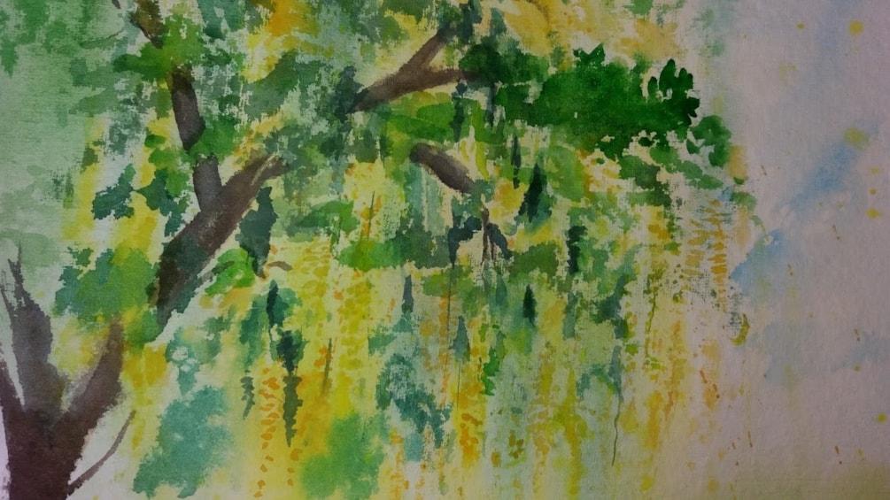 Laburnum Tree