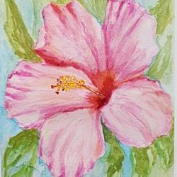 Hibiscus #5