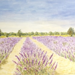 88 Lavender