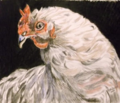 Thoughts of a chicken