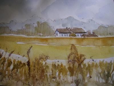 Cornfields (2)