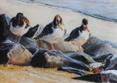 Preening oystercatchers (pastel)