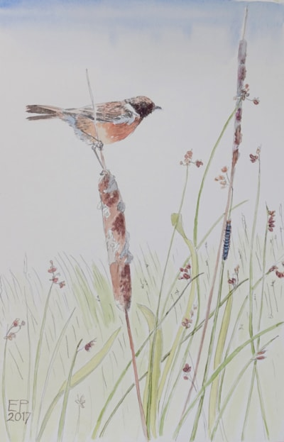 Stonechat and caterpillar