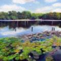 Water Lilies on Blackroot Pool