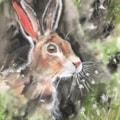 Funky hare