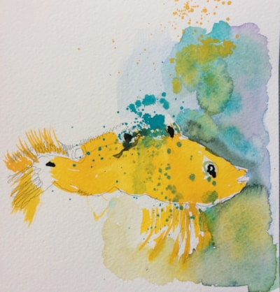 Yellow Wrasse