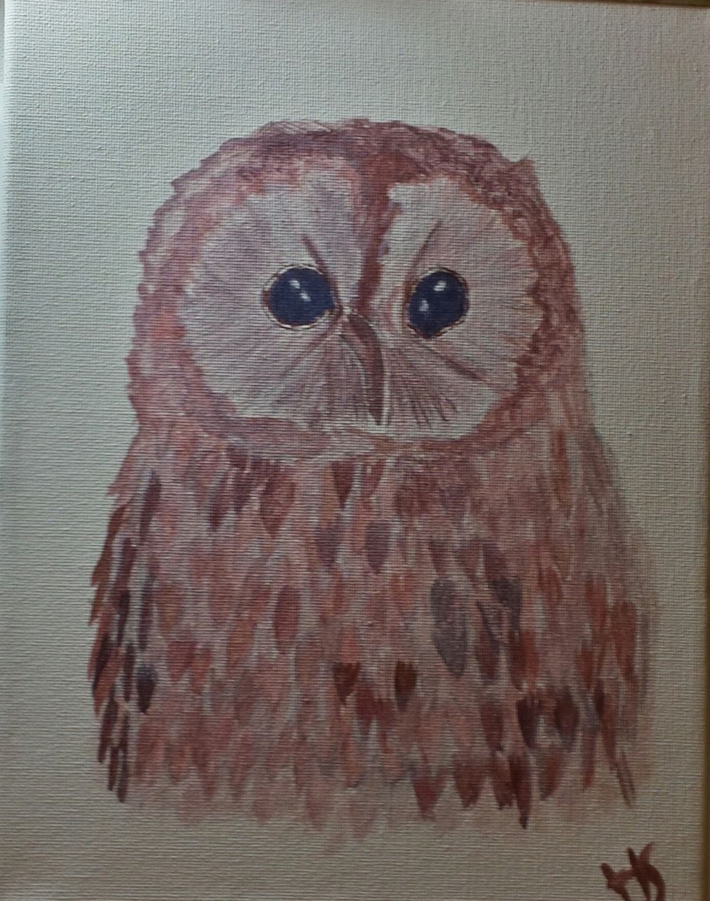 Tawney owl with summer coat on