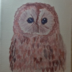 Tawney owl with summer coat on
