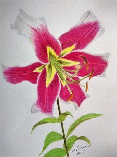Fiona's Fabulous Lily