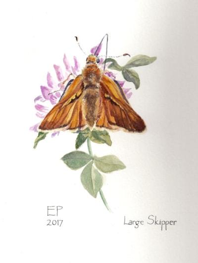 Large Skipper