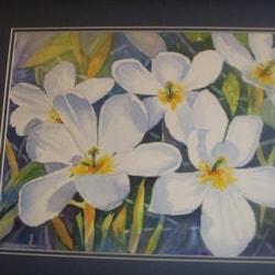 White tulips 2011