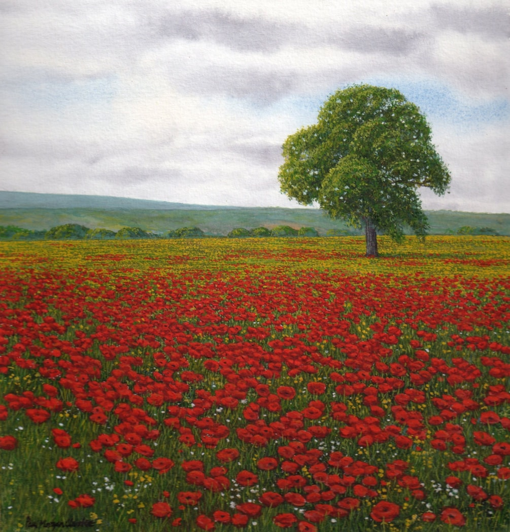 Poppies Northumberland