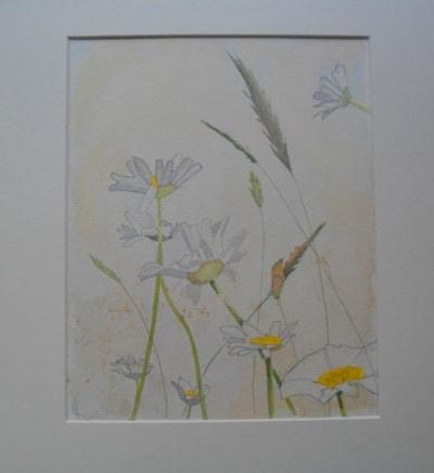 Daisy watercolour