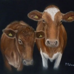 """Two cows"""
