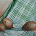 Onions Still Life