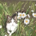 Maisie in the daisies