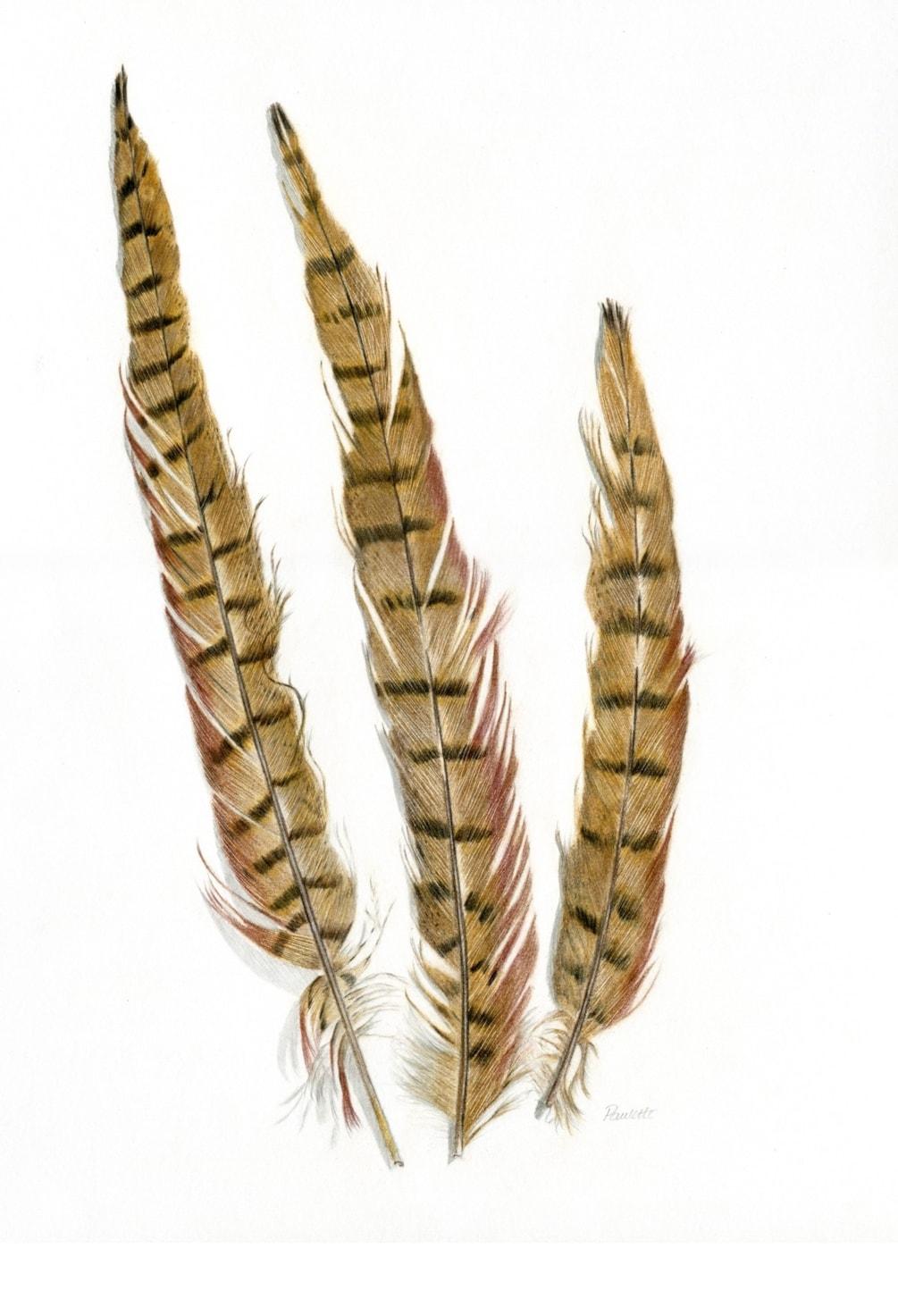Pheasant Fan