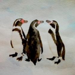 Penguins in conversation