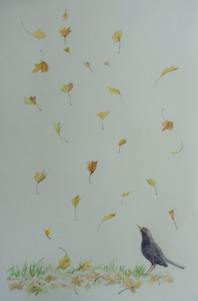 Blackbird and the falling leaves