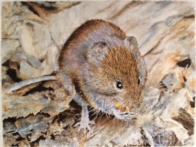 Field mouse with nut
