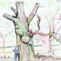 Richmond Park oak pollard