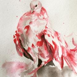Pigeon Chest