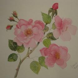 in my garden : june , roses