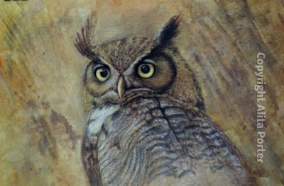 Owl in acrylic & pastel