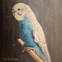 'Billy' small water mixable oil sketch of rainbow budgie