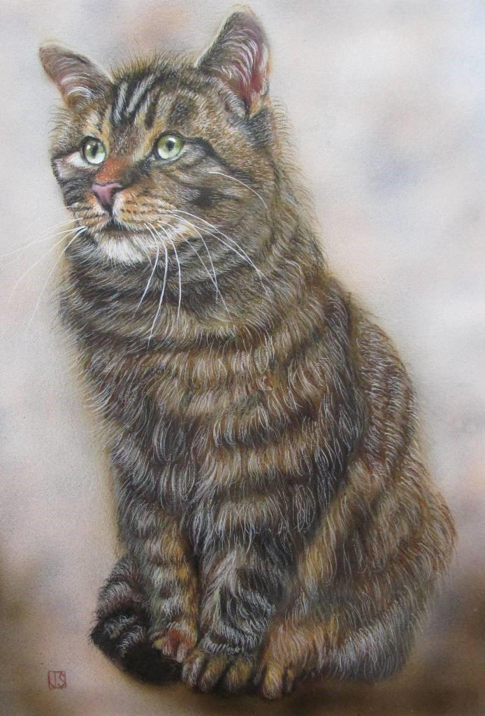 Garden Centre Cat