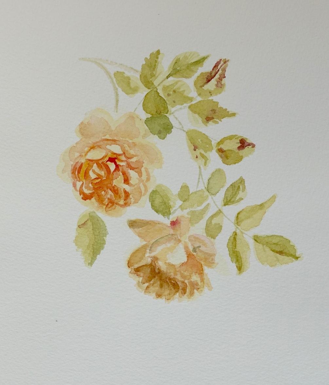 "Rosa ""Golden celebration"""