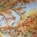Autumnal Maple