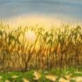 Sunrise behind Corn Field
