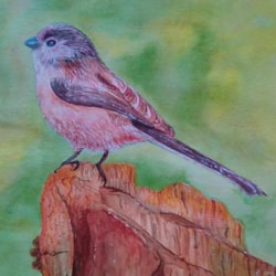 Long tailed tit (leisure painter demonstration)