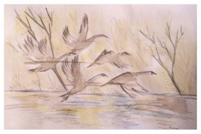 Flock of Geese