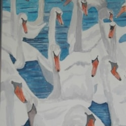 hungry swans