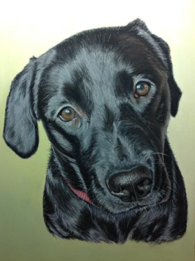 Bonnie the Labrador