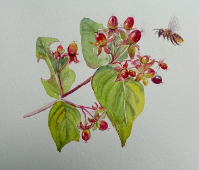 Leafcutter bee and tutsan