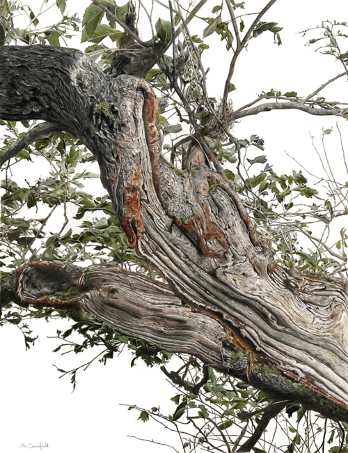 A bit of an old Tree