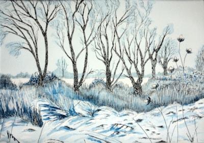 Afton Marsh in the Snow