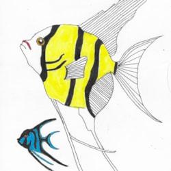 Angel Fish (1)