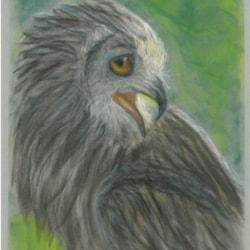 Angry Owl1024_1