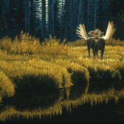 Autumn Confrontation 1992 24 x 36 oil