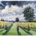 Autumn Light, Galleywood Vineyard.