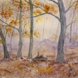 Autumn Morning Woods May 20 72 dpi