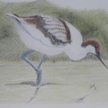 Avocet Original Painting