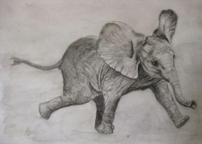 Baby Elephant 2019